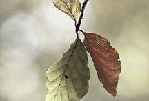 ΕΠΟΧΕΣ :: ΦΘΙΝΟΠΩΡΟ NoPinLimits / Seasons :: Autumn