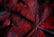 ΕΡΥΘΡΟ ΒΑΘΥ :: 2 :: DARK RED NoPinLimits / Γαιώδεις < Αποχρώσεις < Ιωδεις :: Brown < Hues < Purple ***** Beet - Βοrdeaux - Burgundy - Marsala - Cranberry