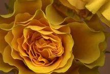 ΚΙΤΡΙΝΟ :: 2 :: YELLOW NoPinLimits / Κεχριμπαρι - Κροκος - Μουσταρδα - Ωχρα :: Amber - Saffron - Mustard - Οchre
