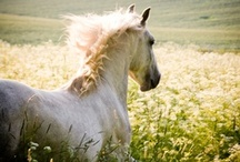 Horse, My Breath of Life / by Jeanne Hechmer
