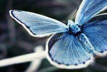 Butterflies & Moths & Bugs