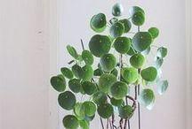 Plantas / Trucos