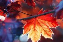 Autumn beauty / Autumn