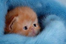 Precious Cats / by Jeanne Gliddon