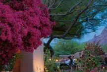 Ogrody-Gardens