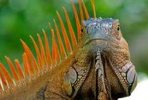 Kameleony i jaszczurki...traszki....warany