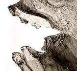 Comevientos / Con estas fotos me adentré en el retrato de criaturas de piedra y arena.  Desapercibidas a ojos poco atentos, se encuentran diseminadas por la costa murciana.  Son azotadas y erosionadas de continuo por el viento marino, y concentran en su pétrea inmovilidad una muda bestialidad, primigenia y agreste, que pareciera fuera a prorrumpir en un grito terrible: devastador y sufriente...