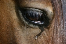 Horses / by Beverly Geller