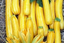 Vegetable Plants Direct / Vegetable Plants Direct is our main website you can visit us here http://www.vegetableplantsdirect.co.uk/