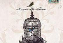 "collection "" oiseau """