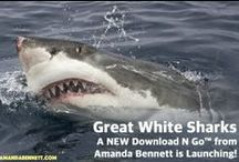 Great White Sharks!