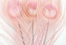 feathers..wings