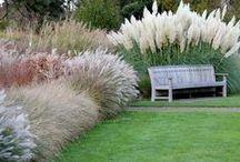 trávy záhradné / záhradná architektúra