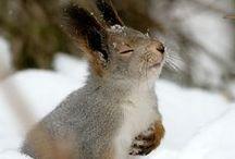 Veveričky / Veveričky - fotografie