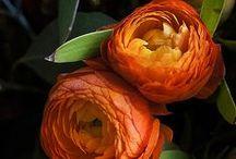Fiori / Fiori - Bouquet - mazzi di fiori
