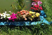 Fiori del mio giardino