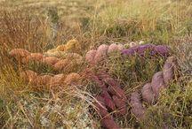 Hebridean Moorland