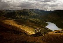 Wine Landscapes / It's little surprise that wine is made in some of the world's most beautiful landscapes.