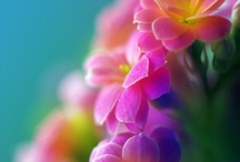 Color! / Color and beautiful colorful colors!  / by AnnMarie Cardin