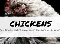Chickens backyard / backyard chicken breeds, coop DIY ideas, and more.