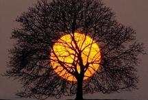 trees / by Dawn Giordano