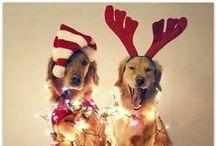Very Merry Christmas / by Brandi Rose