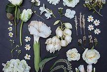 Trends | Botanicals