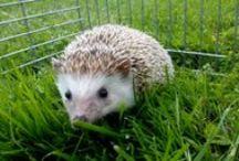 My Animals / Animals, cute pets :3 loves , my photos