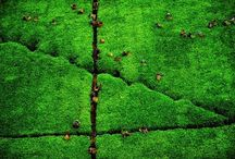 """: YANN ARTHUS-BERTRAND / """" The Earth is Art, the photographer is only a witness. """""""