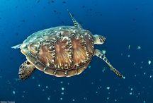 OCEAN LIFE...