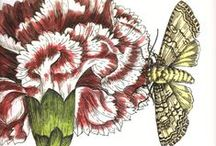FLORA & FAUNA / Vintage references in botanical and zoological illustration / by Thaís Medina