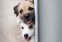 DOGS: MAN'S BEST FRIEND...