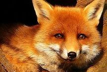 <3 FOXES