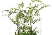 Rośliny (Plants)