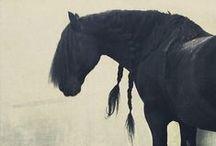 Friesen♡ / Black Beauty Friesian Horse