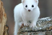 Animal Familiar: Ermine / Learn more about your style type at katilmoore.com