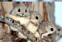 My Furry Friends / world of cute little friends who makes human life worthwhile