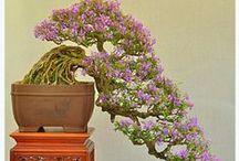 Bonsai / like the great tall tree...let us all be free..Bonsai