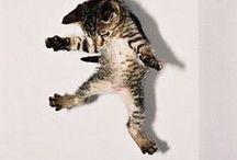 CATS / 主にこねこ