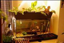 Aquaponics/Gardening