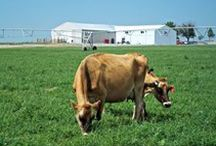 Farms & Dairy / #Farms and #Dairy