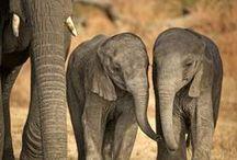 Fotos Elefanten