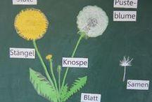 SU: Pflanzen