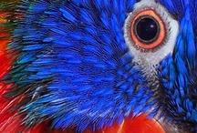 Birds / by Patty Welch