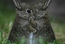 Bunnies! / by Jeremiah Jones