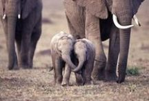 Elephants that I love / by Leah Farley