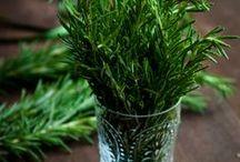 Food: seasoning and herbs