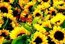 zonnebloemen / by Nienke Lassche