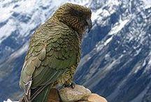 New Zealand Animals