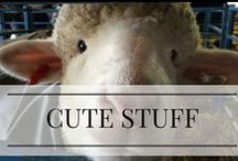 Quirky, Cute, Fun / Little bits of miscellaneous inspiration